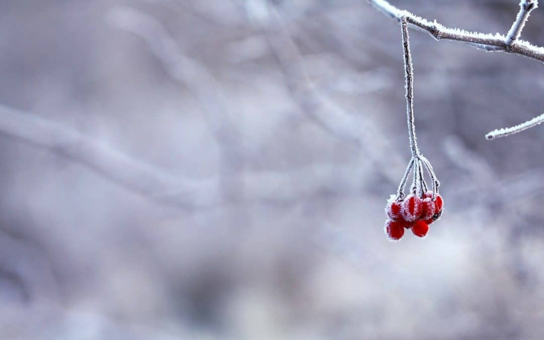 Seasons of Spiritual Growth 2